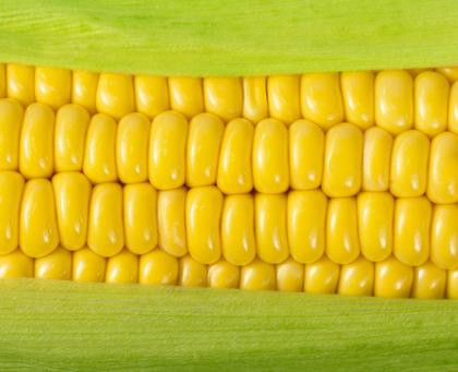 corn images