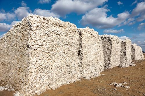 cottonpiles