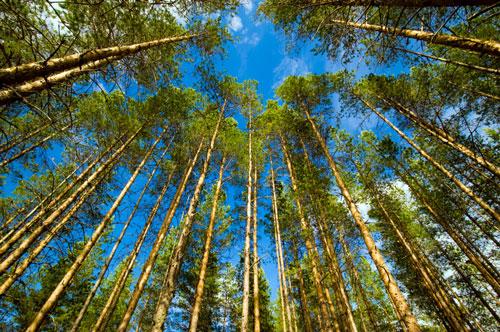 Finland forest