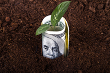 Dollar in soil