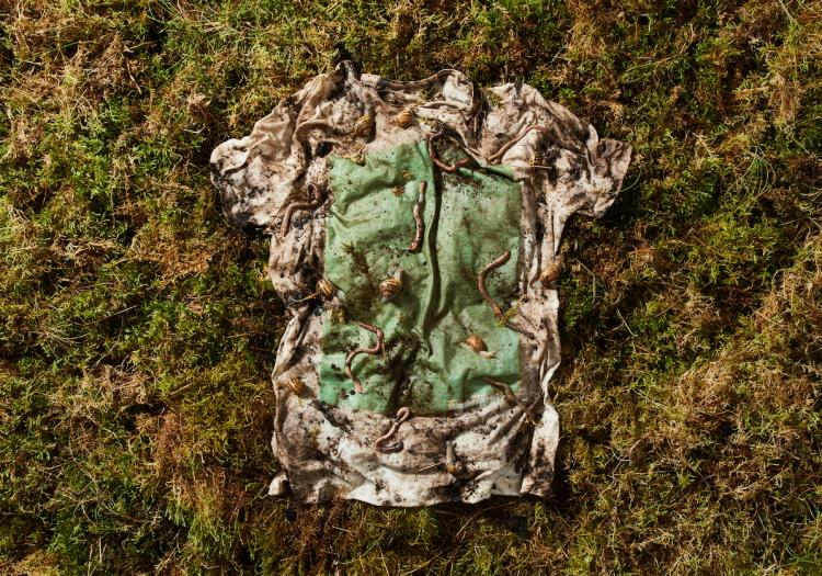 Plant and algae t-shirt biodegrades in 12 weeks | Fashion & Retail ...
